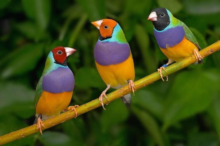 Viết blog về chủ đề nuôi chim
